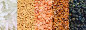 corn - seeds